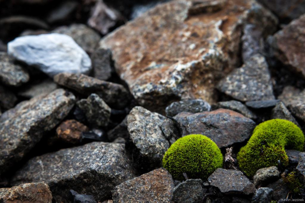 Mossy railroad rocks