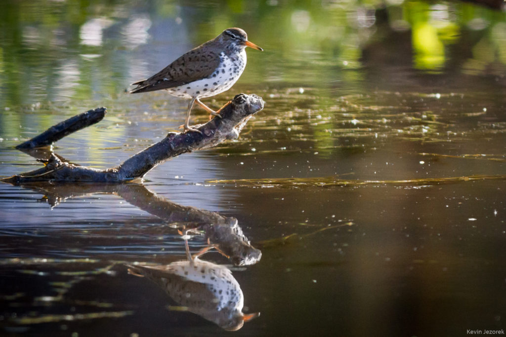 Hunting Bird